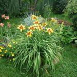 С какими цветами сочетаются лилейники в ландшафтном дизайне сада виды растений и фото