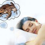 Снится жаба к чему — жабы к чему снятся большие