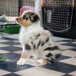 Список популярных собачьих питомников Санкт-Петербурга на 2019 год