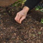 Посев огурцов на рассаду подготовка семян к выращиванию рассады, пересадка на постоянное место
