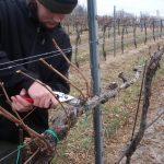 Обрезка винограда весной в пошаговом описании с видео инструкция для начинающих
