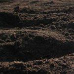 Подкормка клубники удобрением особенности весной и летом