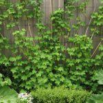 Посадка смородины весной пошаговая инструкция как правильно сажать и ухаживать