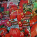 Посадка помидоров как правильно сажать в открытый грунт и на рассаду, видео