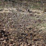 Пересадка крыжовника на новое месте как это лучше сделать весной и осенью