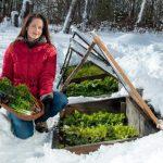 Посевной лунный календарь на февраль 2019 года для огородника и садовода