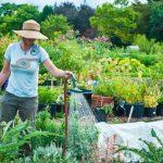 Лунный посевной календарь на июнь 2019 года для огородников и садоводов