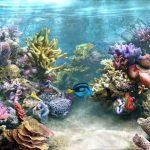 Фон для аквариума как наклеить (4 способа), виды, сделать фон своими руками