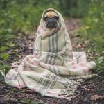 Рейтинг лучших гостиниц для животных в Ростове-на-Дону 2019