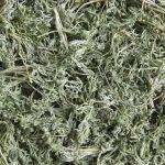 Полынь горькая — лечебные свойства и противопоказания, отзывы о применении настойки и прочих