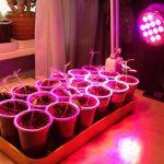 Лампа «Фитосвет» для подсветки рассады особенности, область использования и эффективность