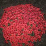 Названия неприхотливых садовых многолетних цветов создаём участок на клумбе, который всё лето будет