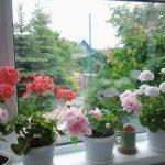 Неприхотливые комнатные цветы на круглый год разновидности растений и правила ухода