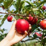 Посевной лунный календарь на сентябрь 2018 года советы садоводу и огороднику