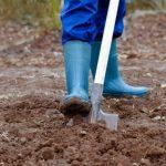 Удобрение для картофеля при посадке в лунку минеральные, органические и комплексные