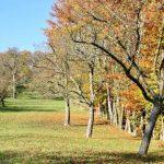 Подкормка плодовых деревьев осенью самые популярные способы