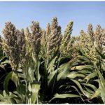 Влияние гумата калия на почву, удобрения и растения в сельском хозяйстве